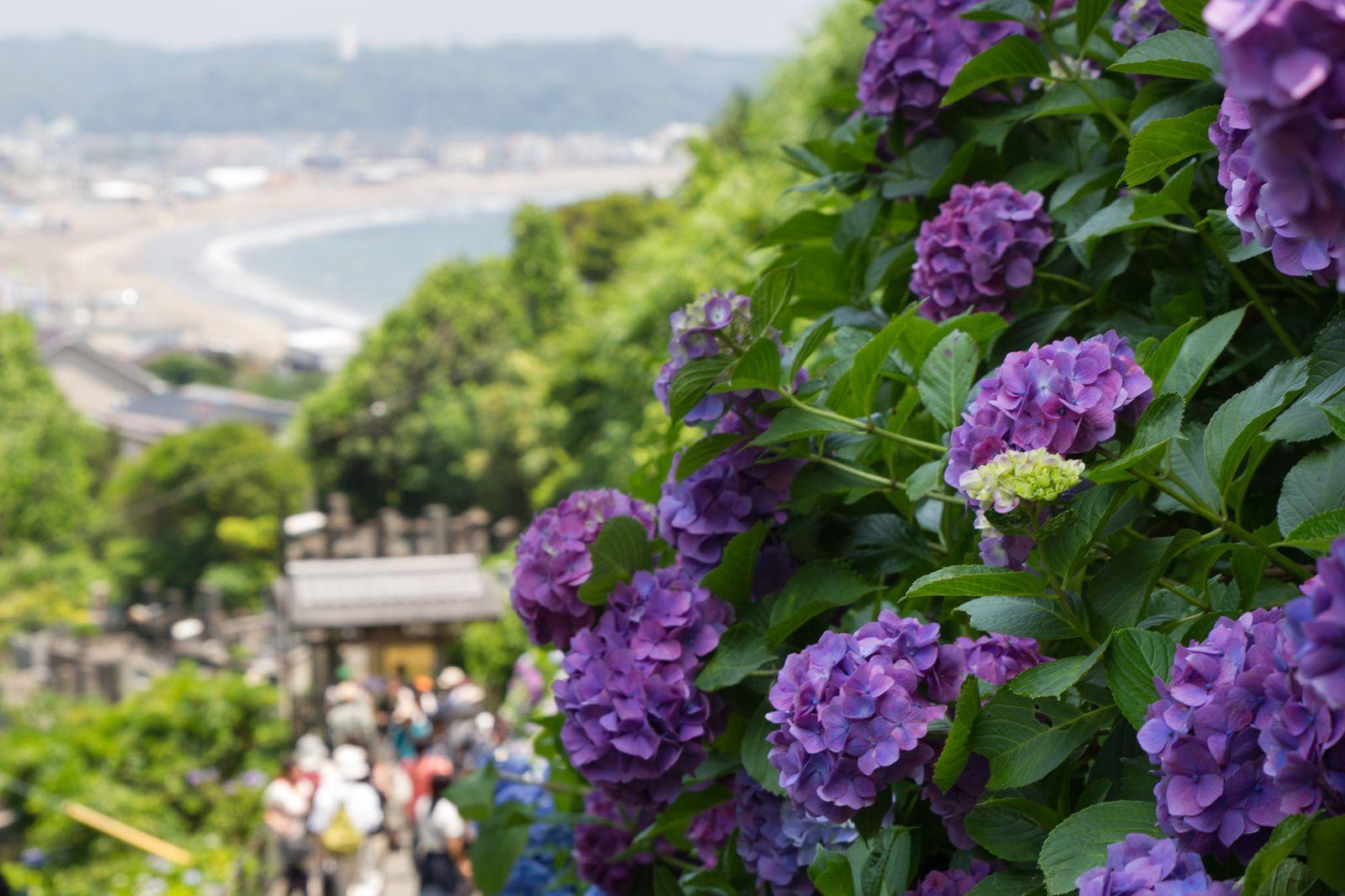 観光で訪れたい人気スポット!鎌倉のおすすめ神社・寺ランキングTOP15 11枚目の画像