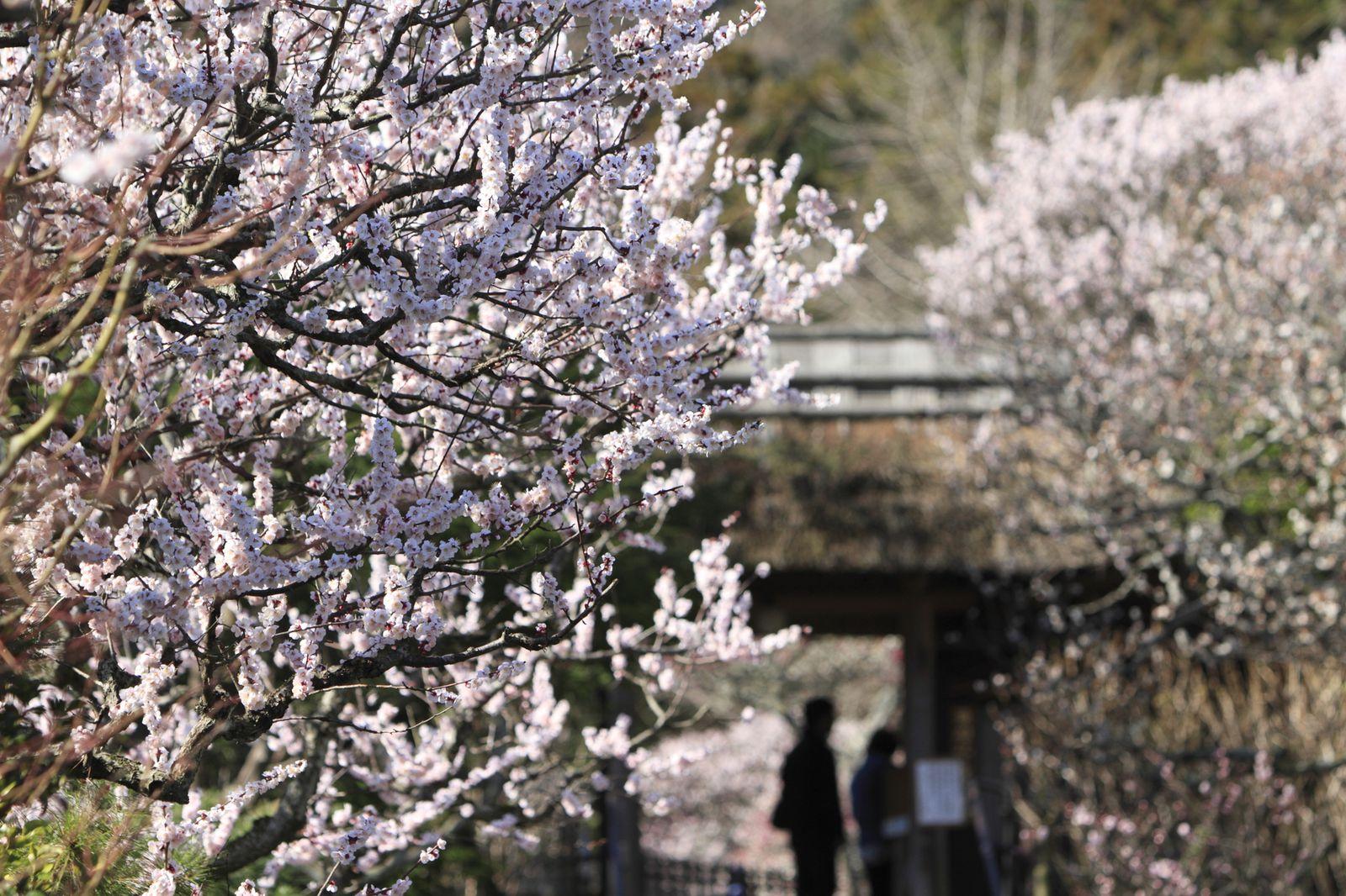 観光で訪れたい人気スポット!鎌倉のおすすめ神社・寺ランキングTOP15 4枚目の画像