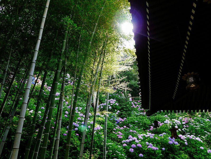 観光で訪れたい人気スポット!鎌倉のおすすめ神社・寺ランキングTOP15 15枚目の画像
