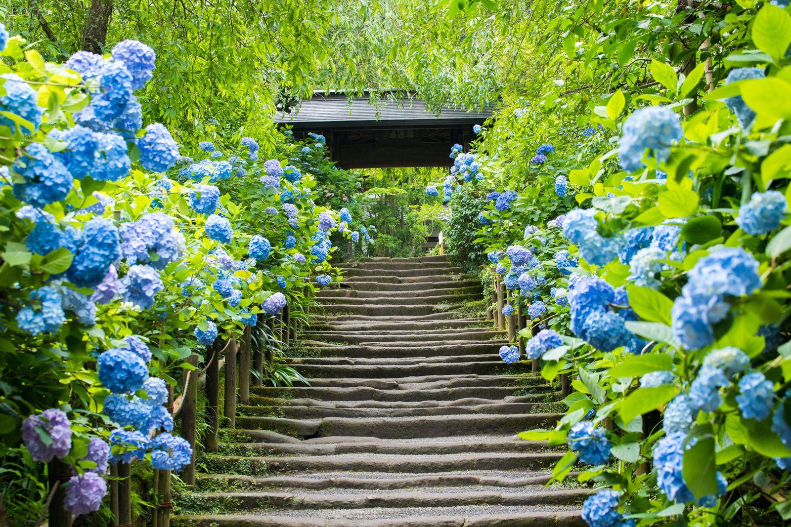 観光で訪れたい人気スポット!鎌倉のおすすめ神社・寺ランキングTOP15 6枚目の画像