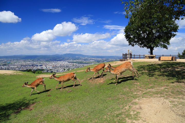 奈良の人気観光スポット43選!定番から穴場までおすすめランキング