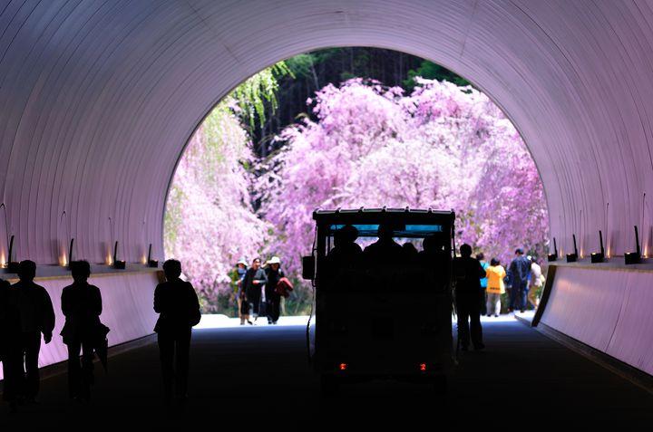 新・春の絶景スポット認定。「ミホ ミュージアム」の桜が私たちを待っている
