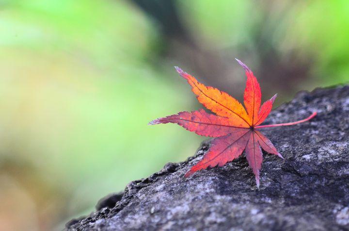 写真で毎日を楽しく!写真を日常から非日常に変えるための5つのコツ