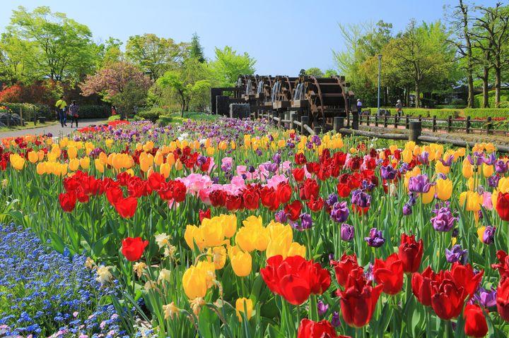 【終了】きっと2021年も大混雑。富山県で「2021となみチューリップフェア」が開催