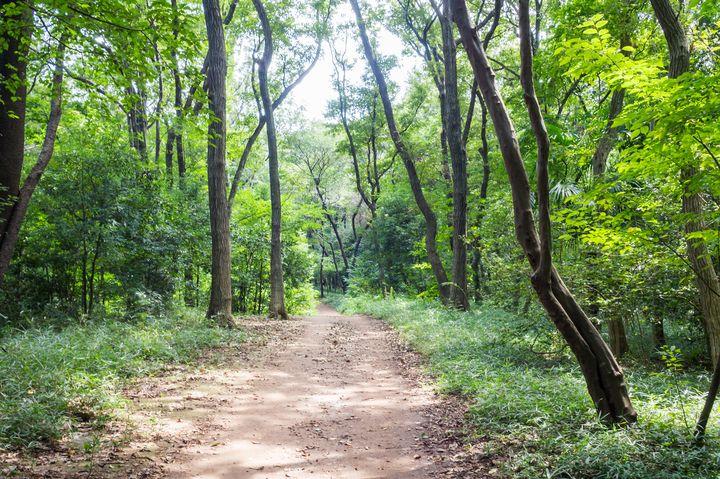 クロスケの家がある?トトロの森として有名な埼玉狭山丘陵の魅力