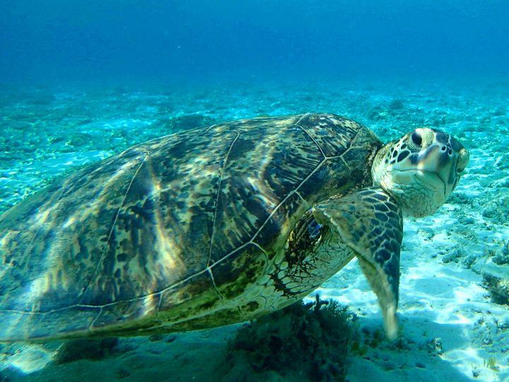 これぞ穴場ビーチ!ウミガメと一緒に泳げる「阿真ビーチ」が沖縄No.1級に美しい