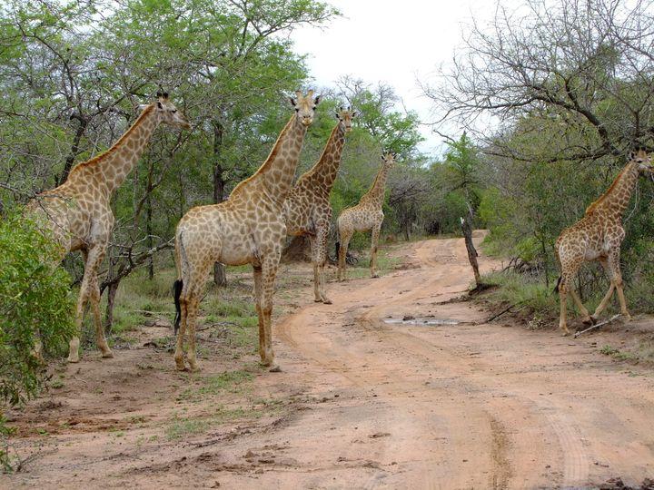 意外にも見どころいっぱい!アフリカの人気観光国ランキングTOP10