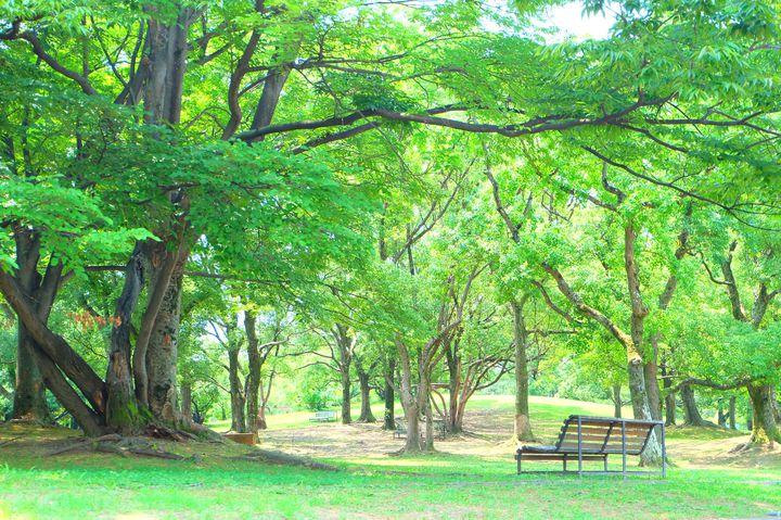 ピクニックも楽しめる!カップルで行きたい大阪の定番公園デートスポット5選