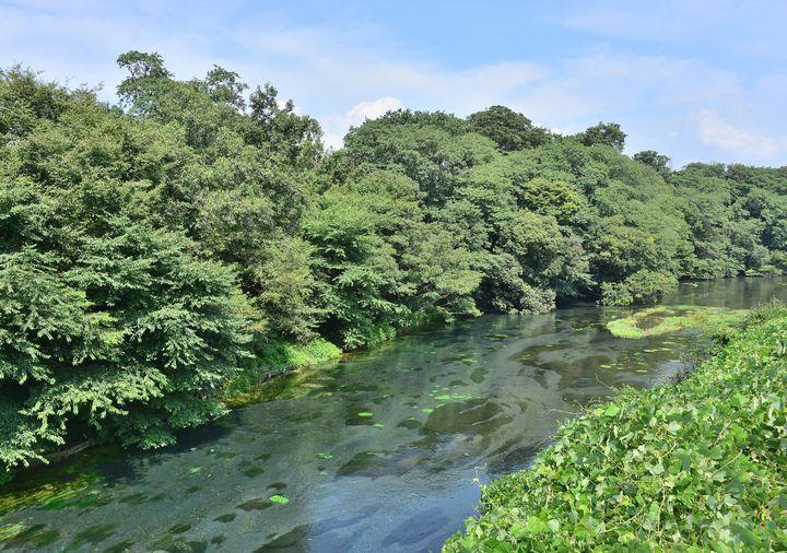 都心からたったの2時間!日本三大清流の一つ「柿田川湧水群」の透明度がスゴい