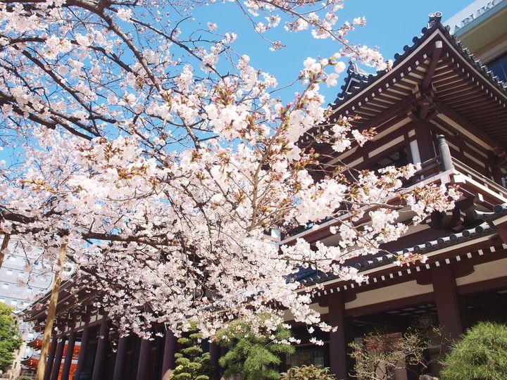 博多・東長寺がスゴイ!美しい五重塔と福岡大仏を一度は見るべし!