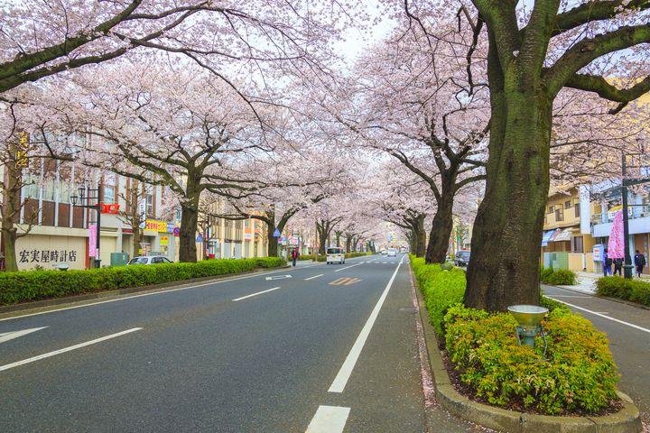 【2019年】春真っ盛りに行く!茨城県のオススメお花見スポットTOP10