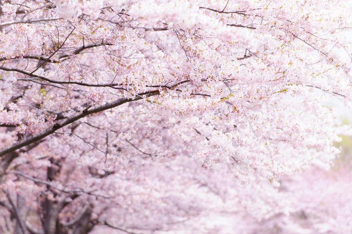 今すぐ予約の準備を!『目黒川』沿いのお花見ができるレストラン10選