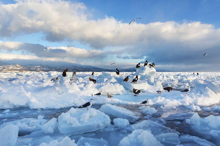 """流氷が辿り着く北の大地へ。日本最後の秘境""""知床半島""""の絶景スポット7選"""