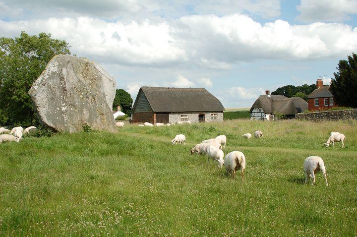 ストーンヘンジと違い、エーヴベリーの遺跡群は開放的です!見学料も無料で近くで触れることも可能。羊も放し飼いにされています。