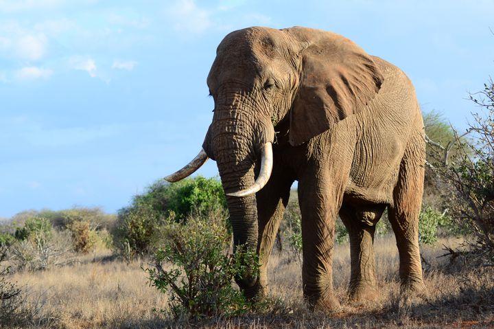 ケニアに行ったらぜひ体験してもらいたいおすすめアクティビティ7選