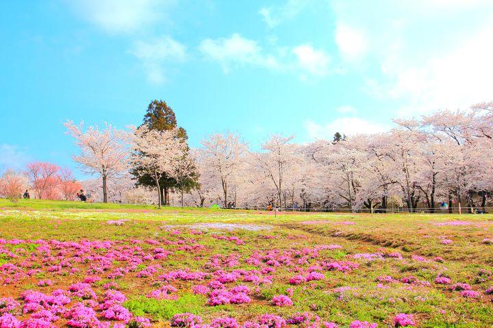 今年の春は群馬へお花見ドライブを。群馬県の「赤城南面千本桜」が気になる