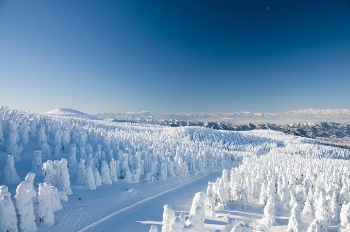 冬の風物詩「樹氷」。国内では蔵王のほか、青森の八甲田、秋田の八幡平などの限られた場所でしか見ることのできない絶景です。