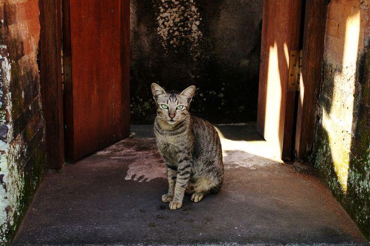 """世界はネコで溢れてる!一度は行きたい世界の""""猫スポット""""ランキングTOP10"""
