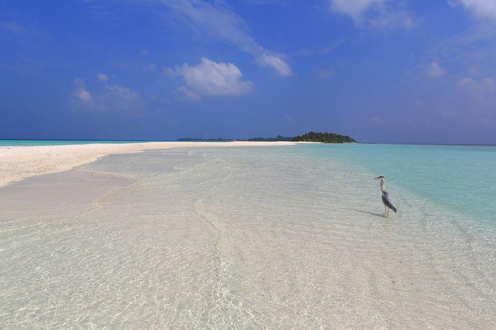 【まさに天国の海】美しすぎる幻のビーチ、ハワイの「サンドバー」