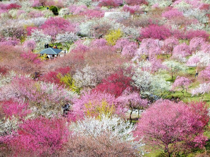 一度見たら忘れられない!この春見るべき「春の絶景」日本全国7選