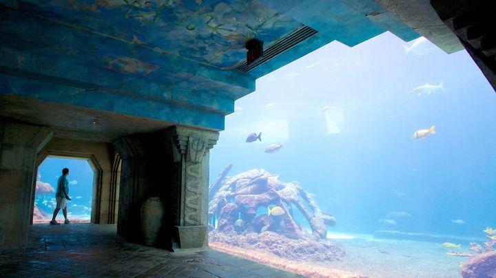 まるで海の中を歩いているような感覚になるカリブ海最大の水族館