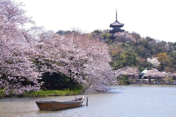ハマっ子が教える!春に行きたい横浜のおすすめデートスポット10選