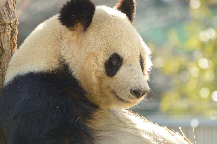 【本当に旅行しているみたい!】上野動物園に画像・動画・口コミで仮想旅行しよう!