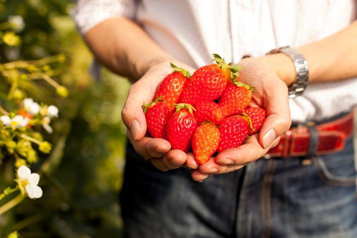 甘いイチゴを食べにいこう!日帰りで行ける関東の苺狩りスポット7選