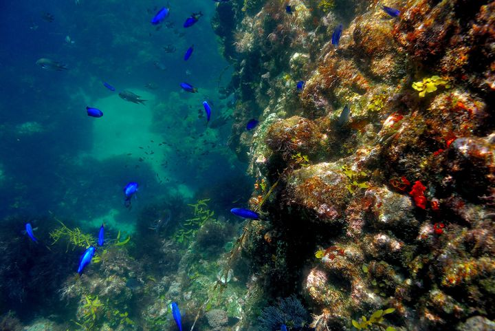伊豆屈指の透明度を誇るヒリゾ浜は、7mの海底までクッキリ見えるほどの美しさ。シュノーケリングには最適なスポットで、海の中では水族館のようにたくさんの美しい魚と出会うことができます。