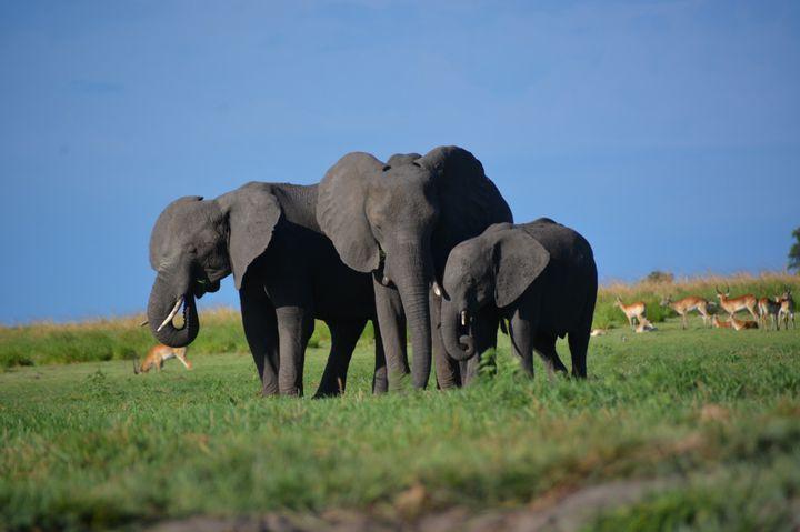 アフリカ旅行するならボツワナを選んだほうが良い10の理由