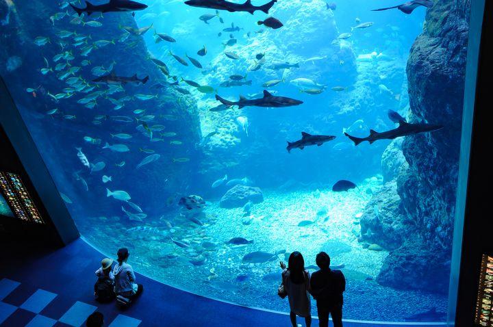 癒されたいあなたに贈る。東京都内近郊のおすすめ水族館7選はこれだ
