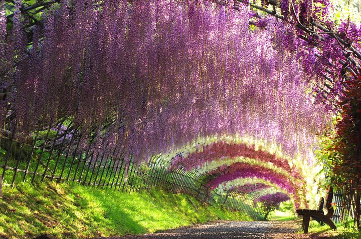 色づいた日本はこんなに美しい!日本全国の美しすぎる「絶景お花畑」10選