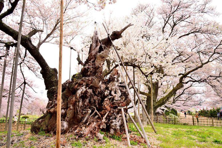 日本人なら全部行きたい!日本が世界に誇る「日本三大◯◯」まとめ