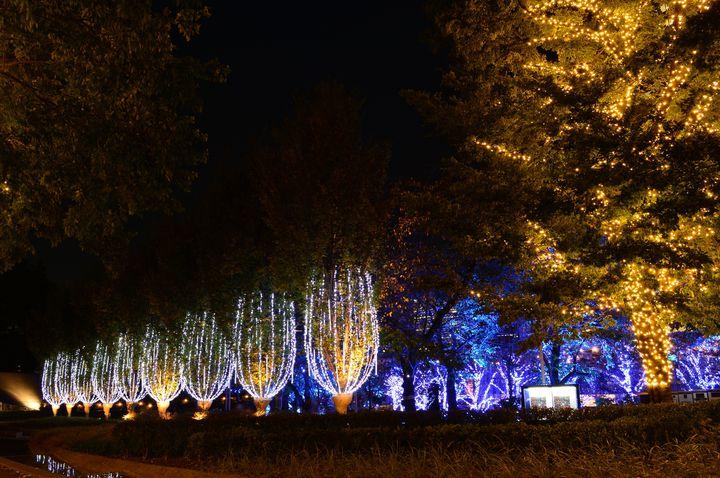 関東でデートならここ!クリスマスおすすめデートスポット5選