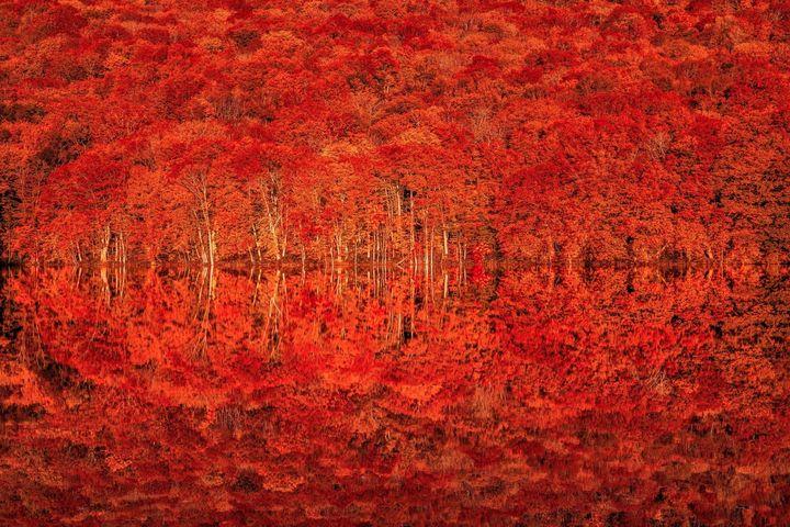 一生に一度は見てみたい秋の絶景。青森「蔦沼(つたぬま)」の紅葉が見ごろに