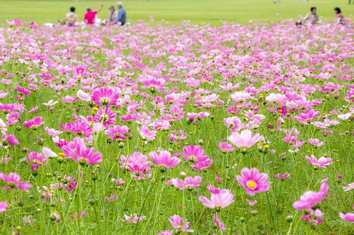 香川県唯一の遊園地、ニューレオマワールドの5つの楽しみ方