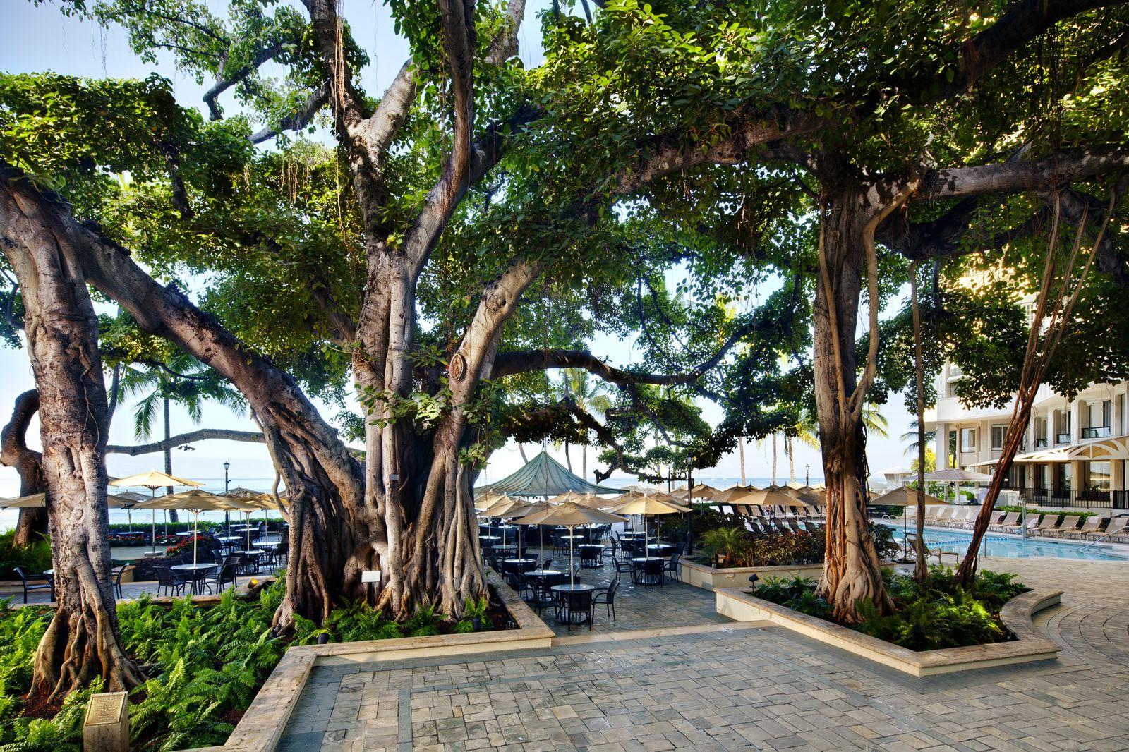 そして、いつも頑張っている女子の皆さんに是非、立ち寄っていただきたいのが、創業以来のホテルのシンボルである中庭の「バニヤンツリー」。樹の幹は12メートル、枝の広がりはなんと、46メートルにも及ぶんだとか。