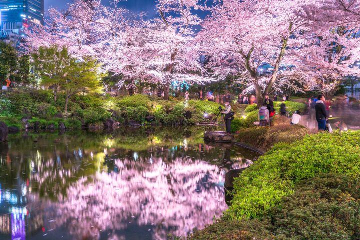 """夜は2人で、夜桜デートしてみない?全国のおすすめ""""夜桜スポット""""10選"""
