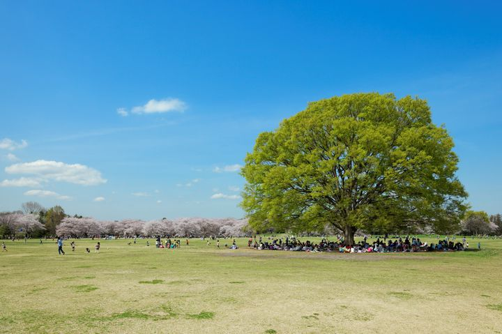 ディズニーだけじゃない!千葉県のおすすめ観光スポットTOP40