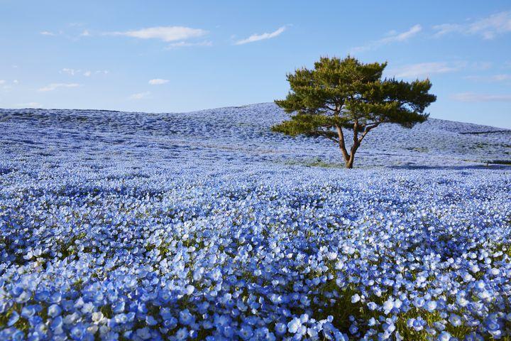 季節の色に染まる絶景。茨城県「国営ひたち海浜公園」は極上ドライブスポット