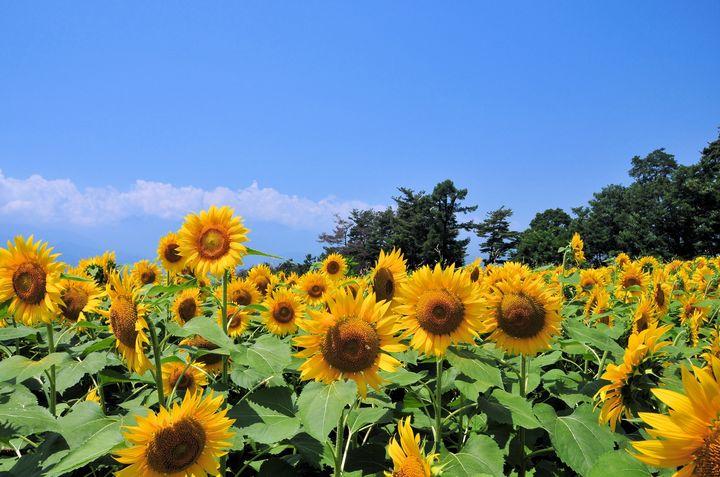 《山梨》美しき日本を再発見!山梨のフォトジェニックな絶景スポット5選