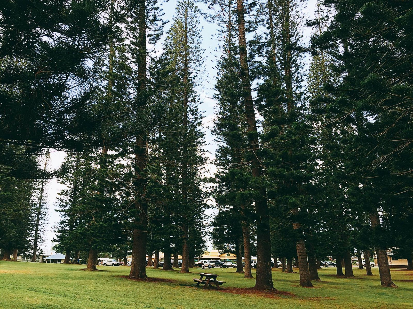 ラリー・エリソンのリーダーシップもあり、続々と旅先としての魅力を高めつつあるラナイ島。さらに2016年末には、ラナイシティに程近い高原側のもう一つのリゾート「フォーシーズンズ リゾート ラナイ ザ ロッジ アット コエレ」も、リニューアルオープンを予定しています。こちらの高原側は年間の平均気温が21度と、とても涼しく、滞在の半分は高原、残りの半分は海側などと両方、楽しむのもオススメです。