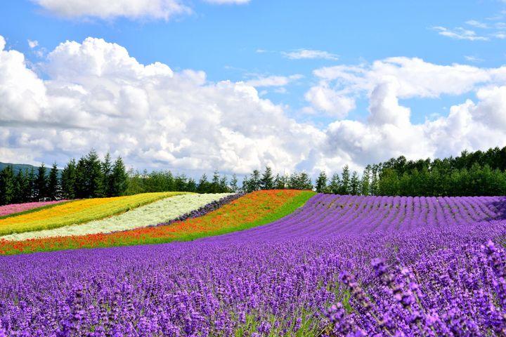 【北海道の人気観光地40選】絶対外さない北海道おすすめスポットランキング