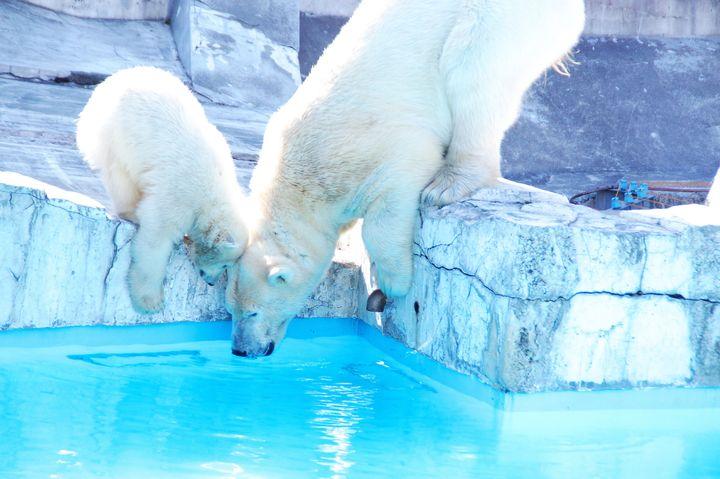 かわいい動物に癒やされたいあなたへ。「円山動物園」でしたい7つのこと