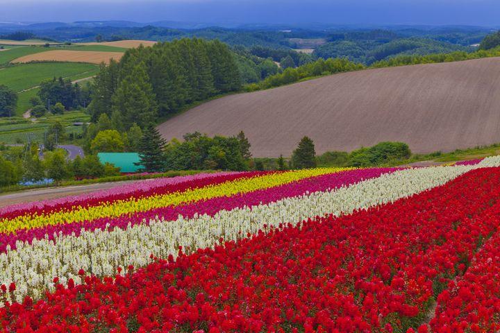 春の絶景に会いにいこう!この春大注目の『絶景お花畑』ランキングTOP7