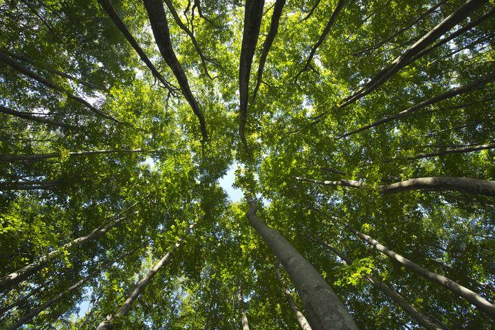 あなたもきっと息を呑む。日本が誇る新潟の絶景「美人林」が美しい