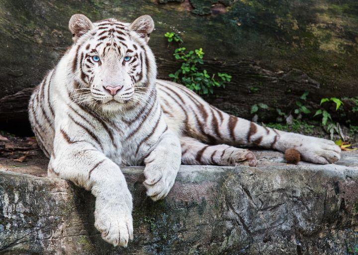 訪れた人々を魅了する!「シンガポール動物園」が世界一美しいと話題に
