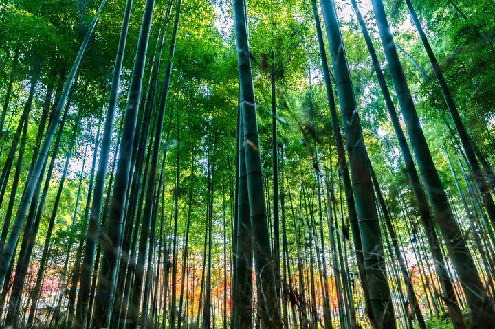 """疲れた心を癒してくれる!美しすぎる日本全国の""""緑の絶景""""6選"""