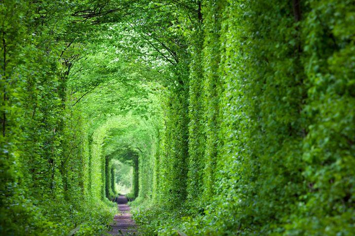 世界中からカップルが訪れる!ウクライナの「恋のトンネル」が美しすぎると話題