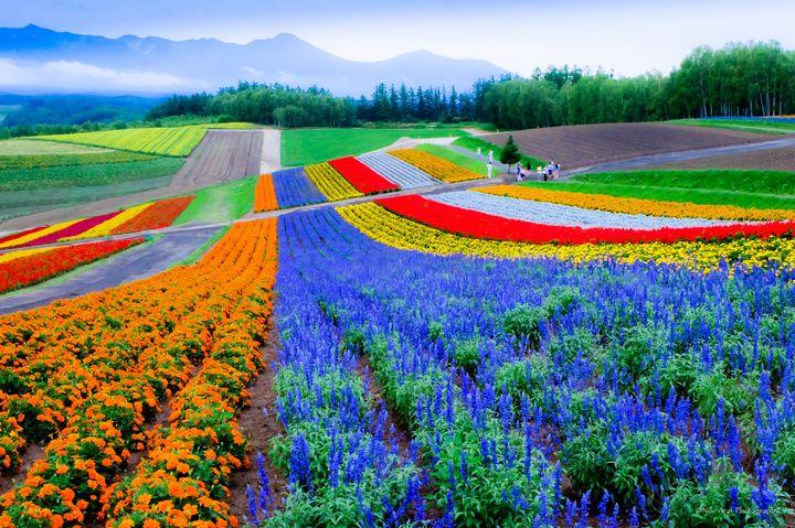 次の旅行先は北海道で決まり!美しすぎる北海道の「花畑」10選